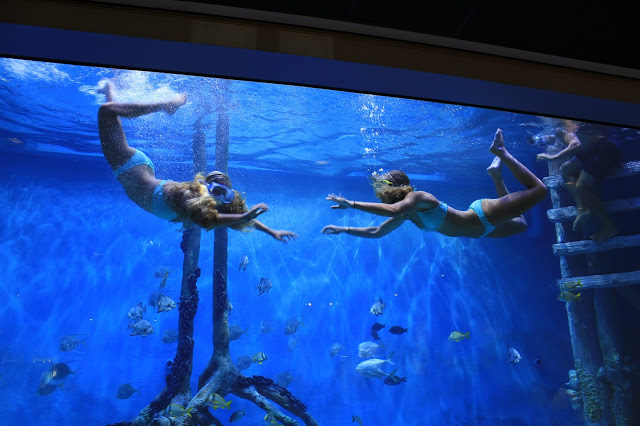 Snorkel in the 35,000 gallon tank at the RumFish Grill at Guy Harvey Outpost in St. Pete Beach